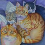 Annie King Kitties